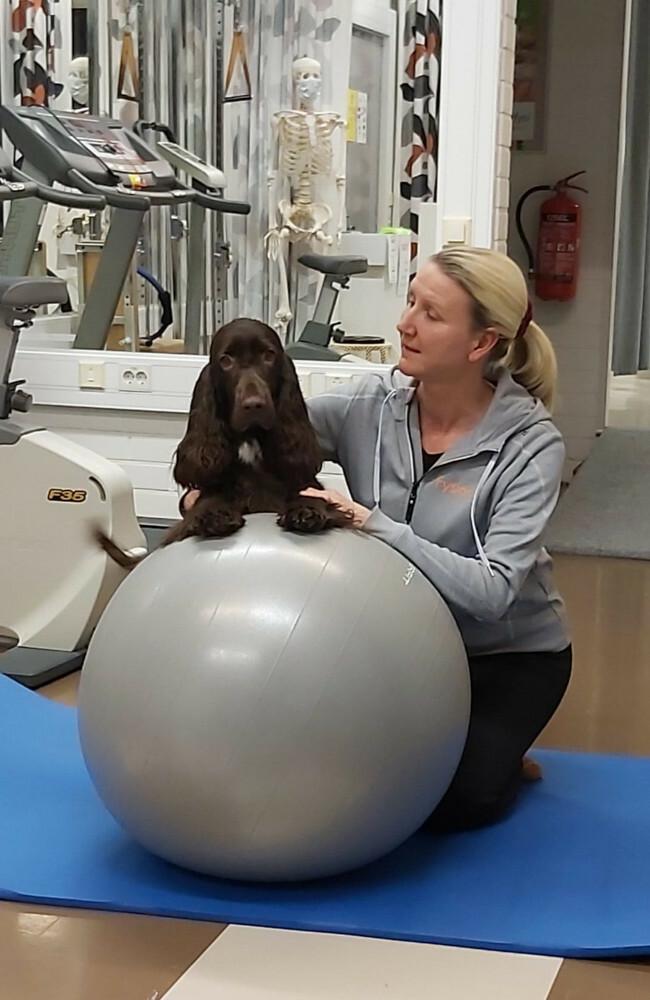 Koira-avusteinen terapia